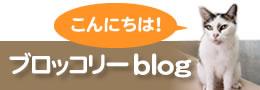 ブロッコリーブログ|長崎市で肩こり・腰痛のお悩み解消は黄鍼灸治療院へ!